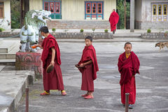Buddhist monks at the Phodong Monastery, Gangtok, Sikkim, India Royalty Free Stock Photos