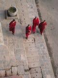 Buddhist Monks Stock Images