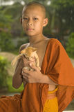 Buddhist Novice in Laos. Novice Buddhist sits with a kitten in the temple royalty free stock image