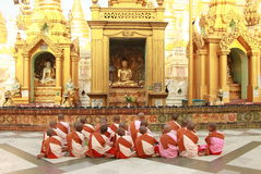 Buddhist Nun Group at Shwedagon Pagoda, Yangon, Myanmar. Little nun are sitting and  praying  in front of the Buddha in the morning Royalty Free Stock Photo