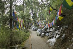A Buddhist path in forest and flags with mantras. Buddhist path in forest and flags with mantras stock photography
