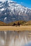 Buddhist Pilgrims Horses Lake Mountain Dhankar Stock Image