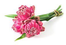 Buddhist pink Lotus Flower offerings to gods Royalty Free Stock Image