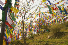 Buddhist prayer flags. In a temple garden in dharamsala, india Royalty Free Stock Photo