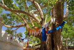 Buddhist prayer flags Royalty Free Stock Image