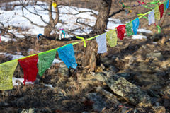 Buddhist prayer flags at winter trees background Royalty Free Stock Image