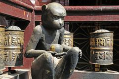 Buddhist prayer wheels an monkey at Golden Temple Royalty Free Stock Image