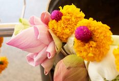 Buddhist Putting Lotuses and Marigold Flowers to Buddha. Buddhist Putting Lotuses and Marigold Flowers in Religion Bowl to Worship, Pay Respect and Make Merit stock images