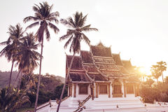 Buddhist Temple With Palm Trees. Multiple palm trees in front of a beautiful temple with the setting sun in the background Royalty Free Stock Image
