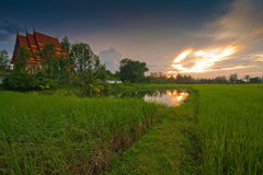 Buddhist temple and rice field. In twilight Royalty Free Stock Photos