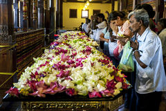 Buddhist worshippers pray in front of a bed of lotus flowers in the Temple of the Sacred Tooth Relic in Kandy, Sri Lanka. Stock Image