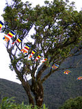 Buddhistic flags at a tree Royalty Free Stock Photos
