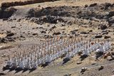 Buddhistic stupas in Tibet Royalty Free Stock Photography