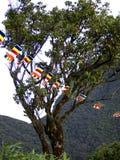 Buddhistische Flaggen an einem Baum Lizenzfreie Stockfotos