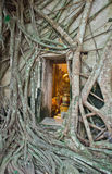 Buddhistische Kirche umgeben durch Baumwurzel Lizenzfreies Stockbild