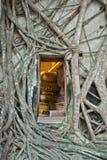 Buddhistische Kirche umgeben durch Baumwurzel Lizenzfreie Stockbilder