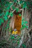 Buddhistische Kirche umgeben durch Baumwurzel Stockbild