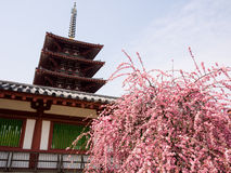 Buddhistischer Tempel im Frühjahr lizenzfreie stockbilder