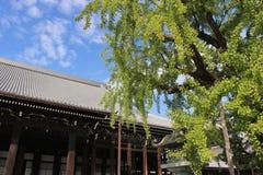 Buddhistischer Tempel-und Ginkgo-Baum in Japan Lizenzfreies Stockfoto
