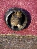 Buddies. Squirrels stock photos
