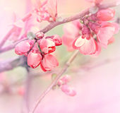 Budding bud. Flowering in spring stock photography