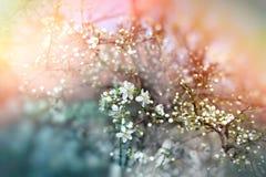 Budding buds - beautiful spring Stock Image