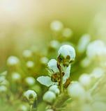 Budding buds. Flowering in spring stock photos