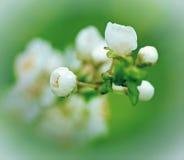 Budding buds(flowering) Stock Image