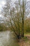 Budding bush on the bank of a creek Royalty Free Stock Photos