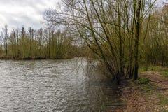 Budding bush on the bank of a creek Stock Photography