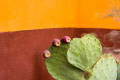 Budding Cactus Plant In Front of a Colorful Wall Stock Photo