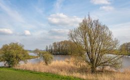 Budding leaves on the branches of a tree on the edge of a lake. Budding leaves on the twigs and branches of a tree on the edge of a Dutch lake. The spring season stock photography