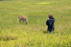 Budding nature photographer. Young boy photographing deer royalty free stock photography