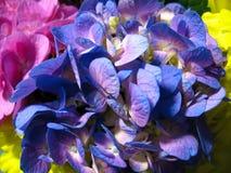 Budding symphony of flowers 2 Royalty Free Stock Image