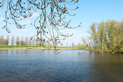 Budding trees along a natural pond in springtime Stock Photos