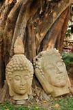 Buddismo dello stucco della testa di Buddha fotografia stock libera da diritti