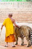 Buddist monk and volunteers with Bengal tiger at the Tiger Temple Stock Image