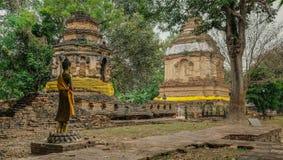 Buddist som betalas i djungeln Royaltyfria Bilder