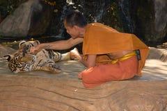 Buddistisk munk med en bengal tiger Arkivfoton