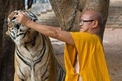 Buddistisk munk med en bengal tiger Royaltyfria Foton