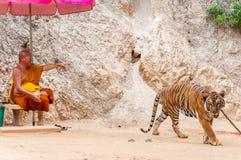 Buddistisk munk med en bengal tiger på Tiger Temple i Kanchanaburi, Thailand Royaltyfria Bilder