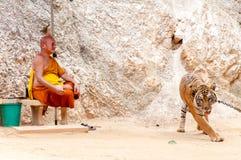 Buddistisk munk med en bengal tiger på Tiger Temple i Kanchanaburi, Thailand Royaltyfri Fotografi