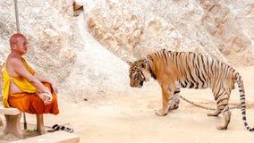 Buddistisk munk med en bengal tiger på Tiger Temple i Kanchanaburi, Thailand Arkivfoto