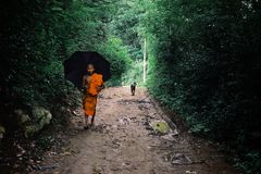 buddistisk munk som hem går med ett paraply arkivfoton