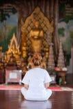 Buddistisk nunnameditation på templet av Thailand Arkivfoto