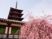 Buddistisk tempel i vår Royaltyfria Bilder