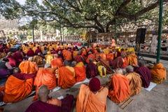 Buddistiska munkar som sitter under det Bodhi trädet, Bodhgaya, Indien Royaltyfri Foto