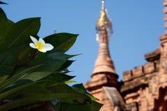 Buddistiska tempel för blommor av Bagan Royaltyfria Foton