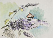 Watercolor painting of a butterfly sitting on a buddleia flower. Watercolor painting of a butterfly on buddleia, also known as butterfly bush, purple flower vector illustration