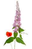 Buddleia and poppy bouquet Royalty Free Stock Photo